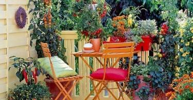 Балкон в комнатных растениях