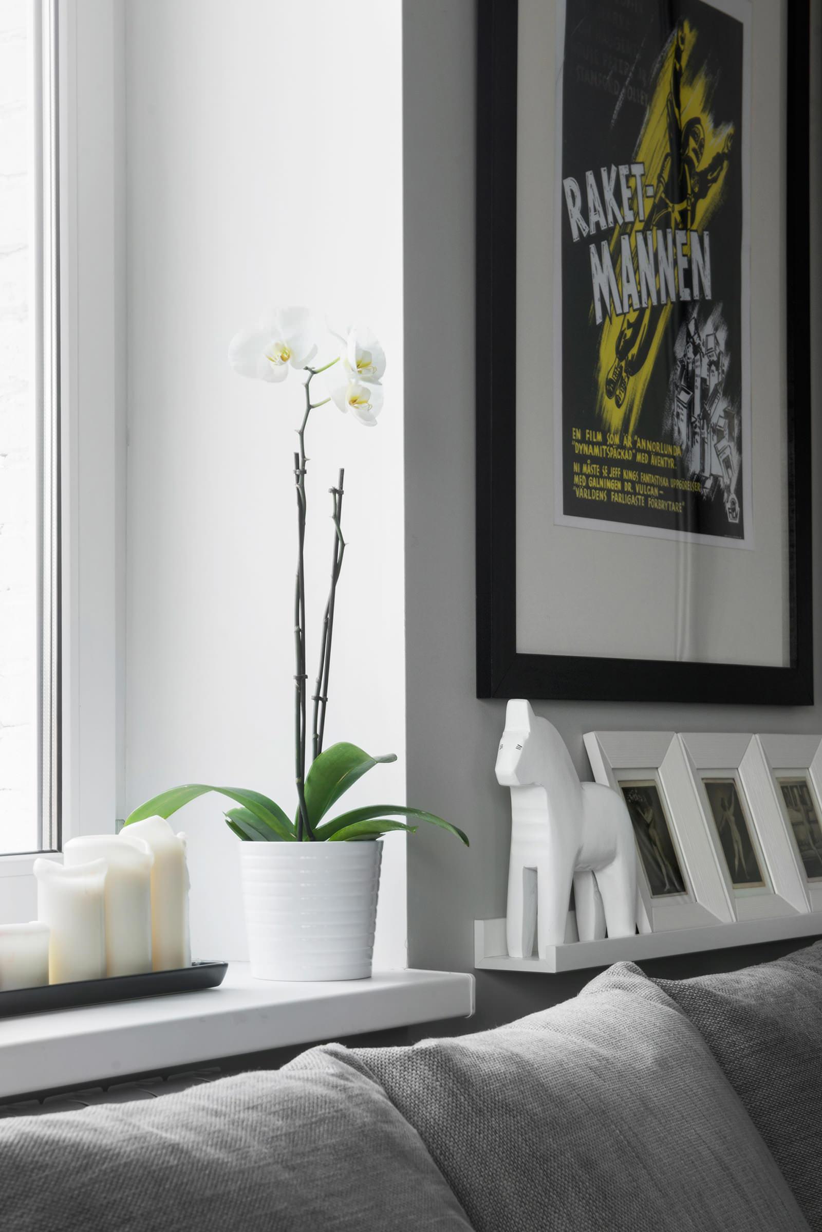 Орхидея в гостиной квартиры-студии