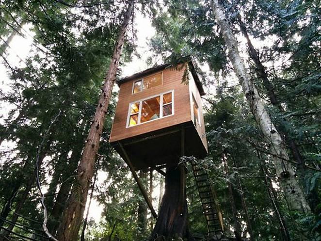 Домик на дереве с лестницей: один из вариантов экономичного жилья на фото