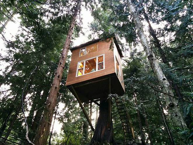 Домик на дереве с лестницей. Общий вид