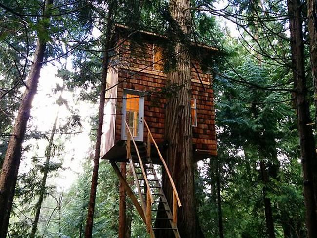Домик на дереве с лестницей. Фото 1