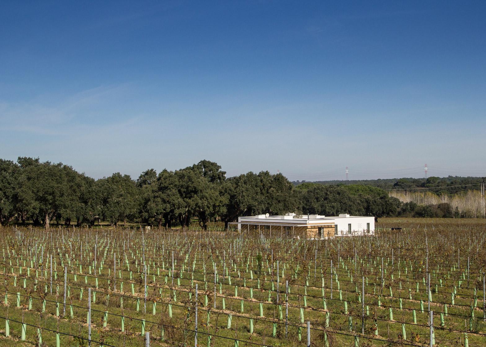 Экодом среди виноградника