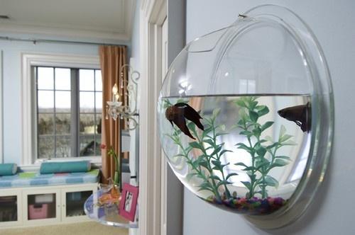 Круглый настенный аквариум