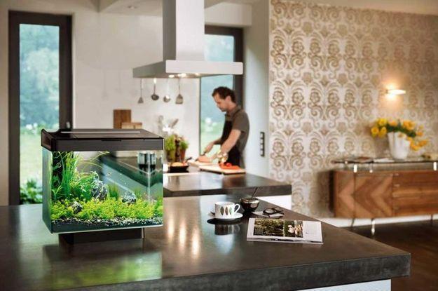 Кубический аквариум на кухне
