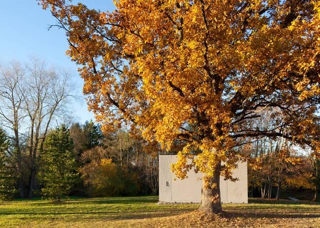 Маленький домик под большим деревом