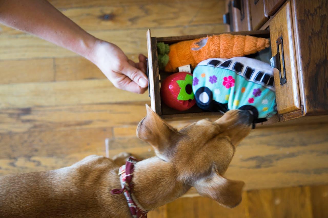 Ящик с игрушками для собаки
