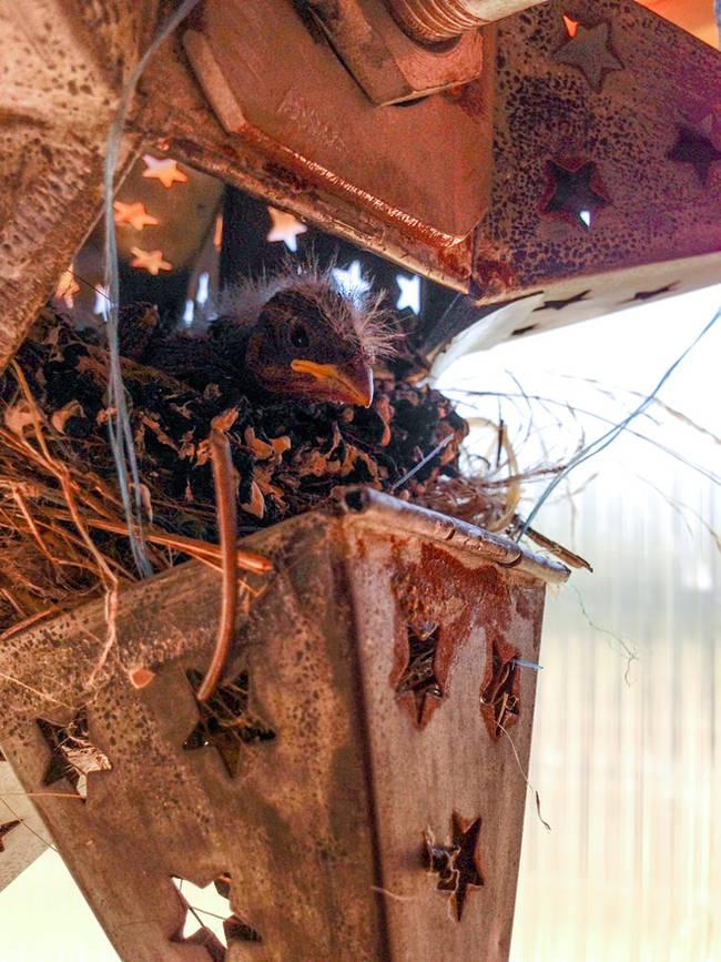 Как построить дом на колёсах своими руками: проект Доминик Муди  - гнездо с птенцом