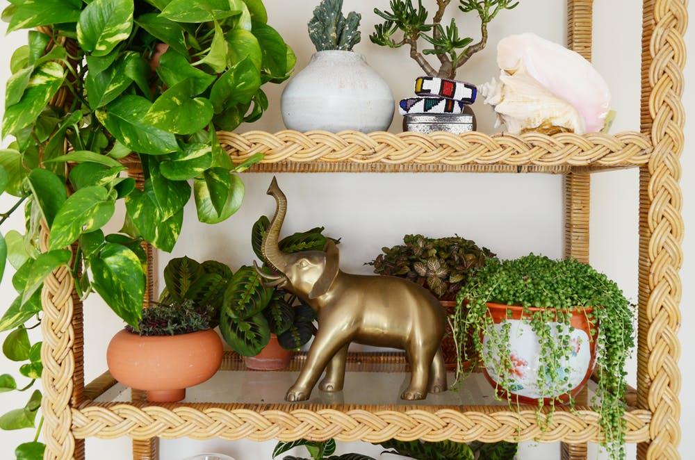 Природные мотивы в интерьере квартиры - фото 4