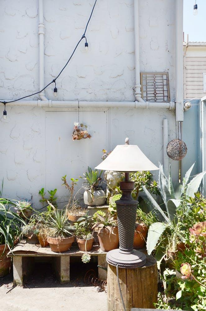 Комнатные растения на террасе
