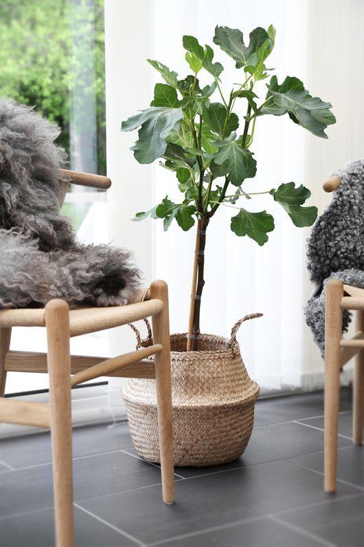 Растение в плетёном горшке