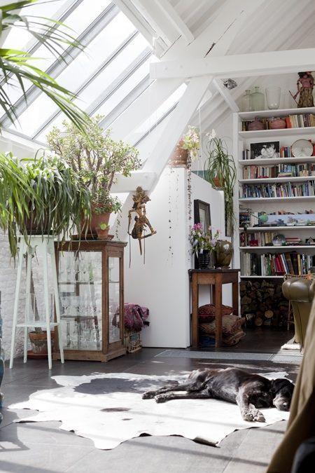 Комнатные растения в мансардном помещении