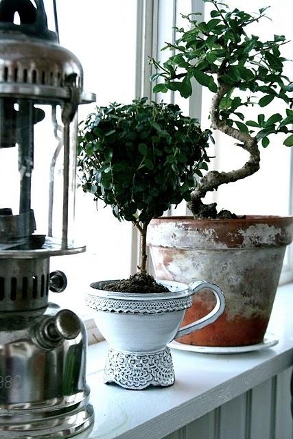 Комнатные растения в японском стиле