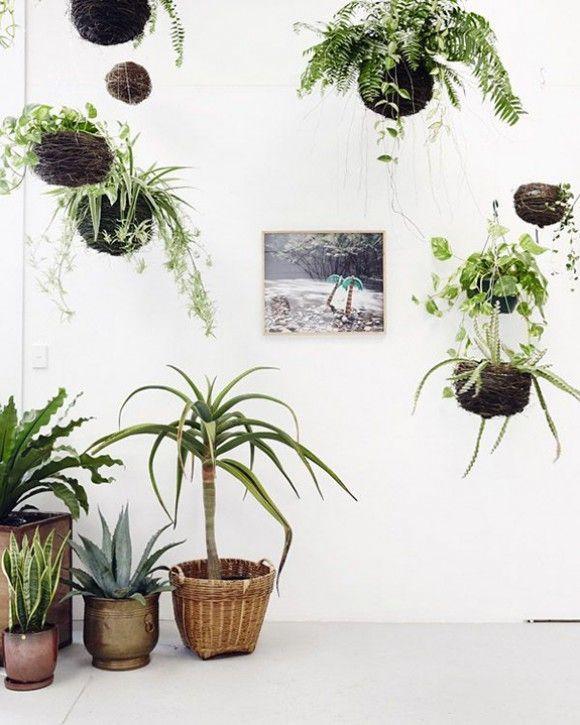 Растения в оригинальных подвесных горшках