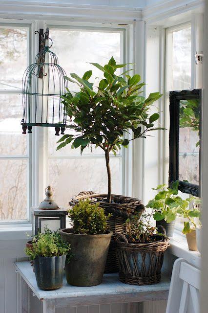 Уголок для комнатных растений