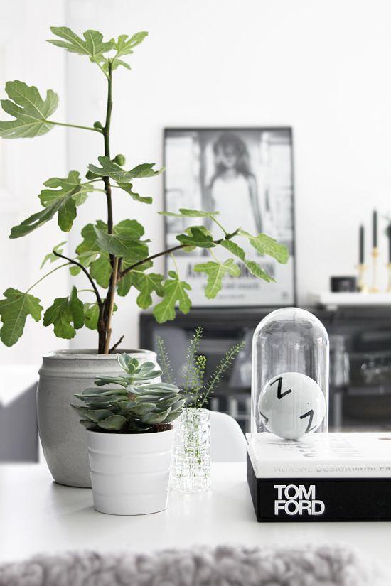 Растения в белых горшках