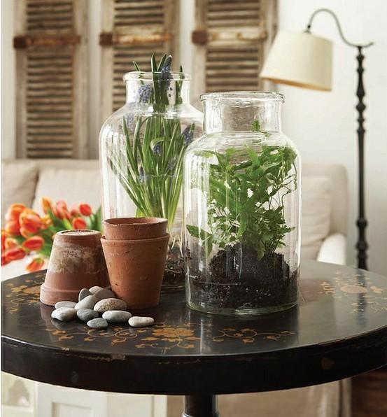 Растения в бутыльках