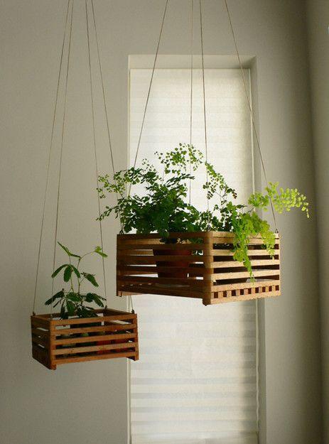 Растения на подвесных полках