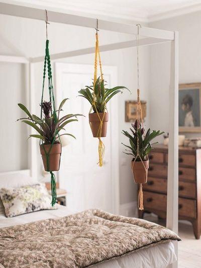 Растения в подвесных горшках