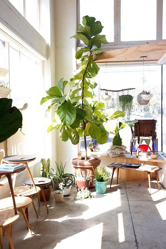 Комнатные растения в углу