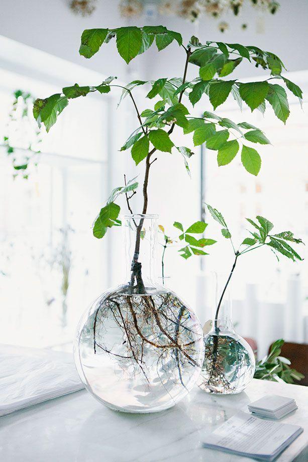Растения в вазах с водой