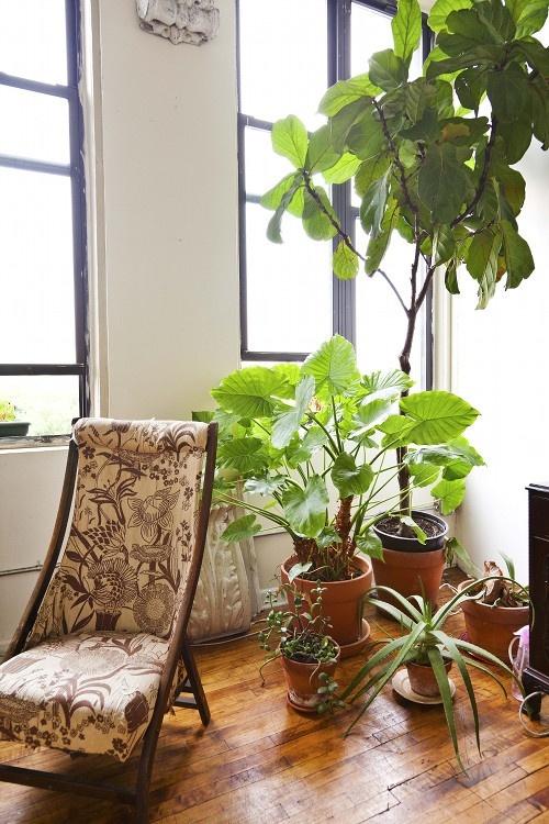 Комнатные растения за креслом