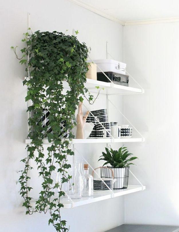 Растения на открытых полках