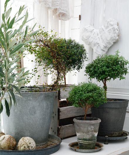 Небольшие комнатные деревья в горшках
