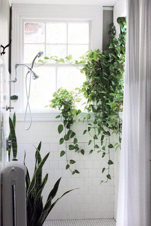 Растения в оформлении ванной