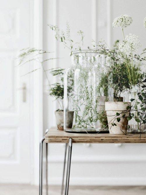 Растения в маленьких горшках