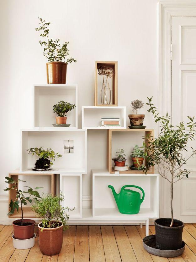 Комнатные растения на подвесных полках
