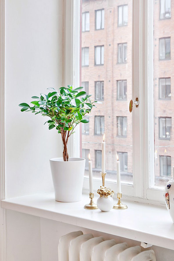 Растение и свечи на подоконнике