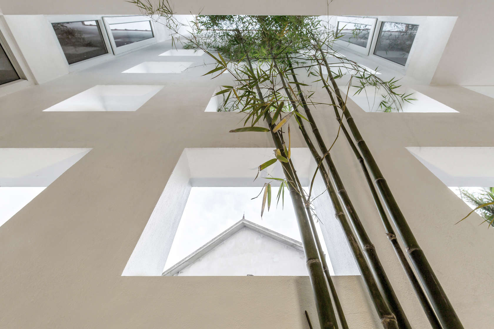 Бамбук в узком бетонном доме
